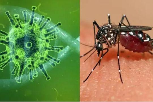 Segundo caso de Corona-Dengue en colonia Santa rosa